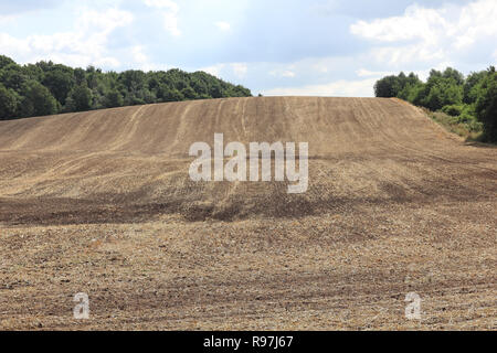 Stubble on a harvested cornfield in Mecklenburg in Germany. - Stock Photo