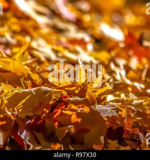 Ray of sunlight on the fallen autumn leaves - Stock Photo