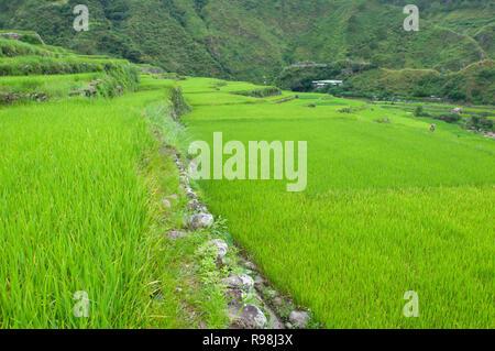 Bontoc Rice Terraces, Mountain Region, Luzon, Philippines, Asia, South Asia - Stock Photo