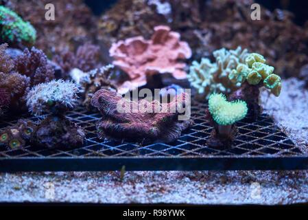 Copenhagen, Denmark - October 11, 2018 : View of  stony corals - Stock Photo