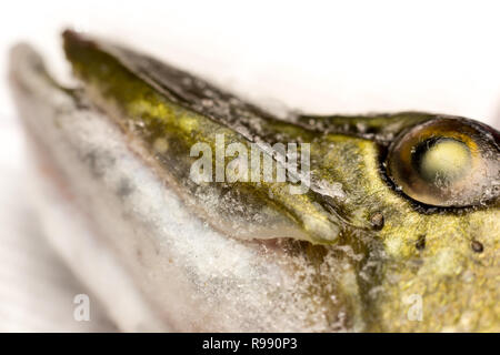 Jaw and eye of a frozen Northern pike fish. - Stock Photo