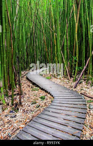 Bamboo Forest along Pipiwai Trail in Maui which can be found near the Road to Hana, Hawaii - Stock Photo