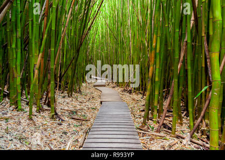 Trail through the Bamboo Forest on Maui, Hawaii along the Pipiwai Trail - Stock Photo