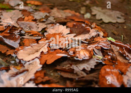 Wet Autumn Leaves - Stock Photo