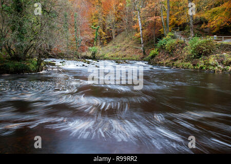 River Wharfe through Strid Wood in Autumn at Bolton Abbey, North Yorkshire Dales - Stock Photo