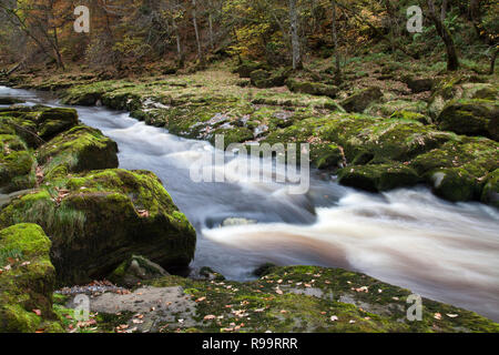 Fast flowing River Wharfe at The Strid in Autumn. Bolton Abbey, North Yorkshire Dales - Stock Photo