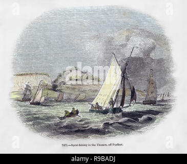 hand coloured engraving of Sprat fishing in the Thames off Purfleet. - Stock Photo