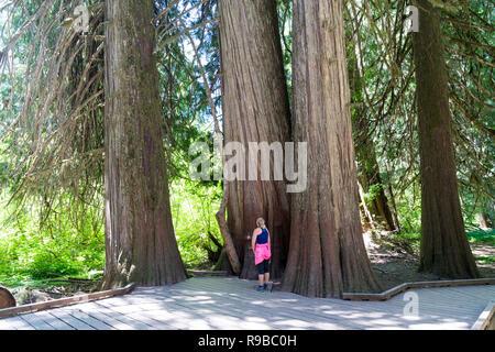 Woman Tourist, Hiker. Location: Grove of the Patriarchs in Mount Rainier National Park, WA - Stock Photo
