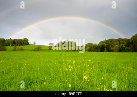 full rainbow over flower meadow and trees near Midhurst, The South Downs National Park, Sussex, UK - Stock Photo