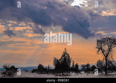 Golden hour at Lake Naivasha, Rift Valley, Kenya - Stock Photo