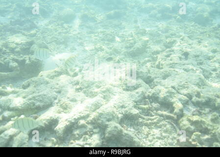 Underwater snorkelling in the Maldives - Stock Photo