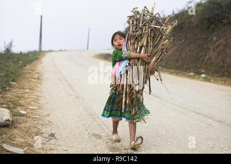 A girl of Hmong ethnicity is carrying some reeds collected on the hills of the beautiful Sa Pa in Vietnam. - Stock Photo