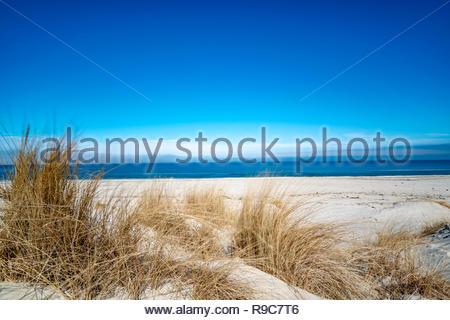 Langzeitbelichtung des Schilfs auf einer Düne der Ostsee weht im Wind. - Stock Photo
