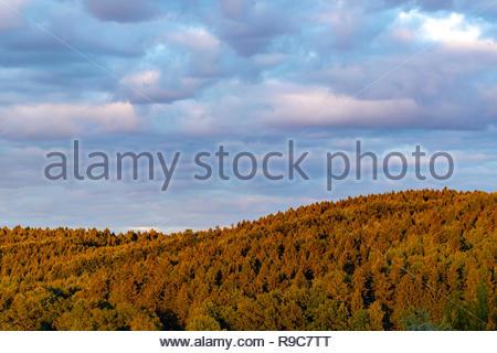 Luftbildaufnahme von Baumgipfel eines Waldgebiets im Schein der Abendsonne - Stock Photo