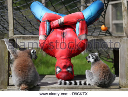REVIEW OF THE YEAR PICS 2018 File photo dated 15/05/18 of David Bharrat dressed as Spiderman demonstrating his parkour skills at Blair Drummond Safari park in Scotland, as preparations got underway for their super hero weekend. - Stock Photo