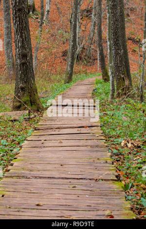 Lonely pathway inside wood in autumn, Plitvice, Croatia - Stock Photo