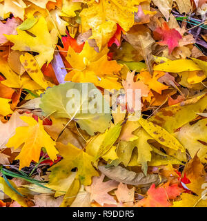 Colorful dry leaves on the ground lit by sunlight - Stock Photo