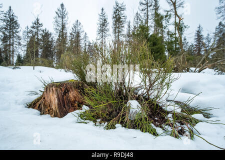 Nationalpark Harz im Winter Oderteich - Stock Photo