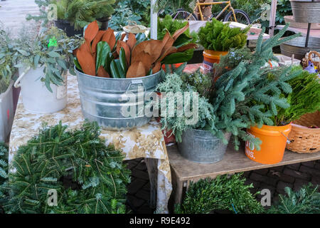 Winter greenery used to make Christmas wreaths and roping on display at the Charleston Christmas Market in Marion Square in Charleston, South Carolina. Brown and green Magnolia leaves, boxwood, sage and cypress are common and traditional southern plants used for the holidays. - Stock Photo