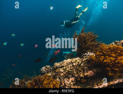 Freediver explores depths, view from the wreckage of the ship - Stock Photo