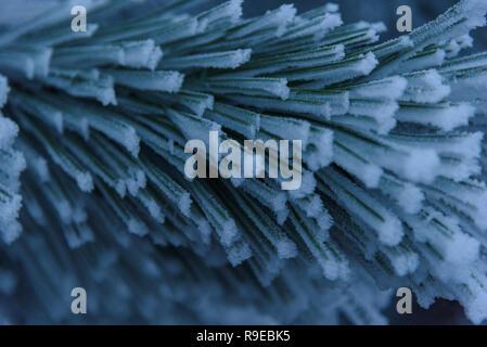 Frozen pine little needles on branch closeup background - Stock Photo