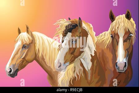 Set of colorful vector portraits of horses breeds ( Pinto Horse; Byelorussian Harness Horse; American Quarter horse) isolated on gradient background - Stock Photo