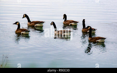 a walk around the pond - Stock Photo
