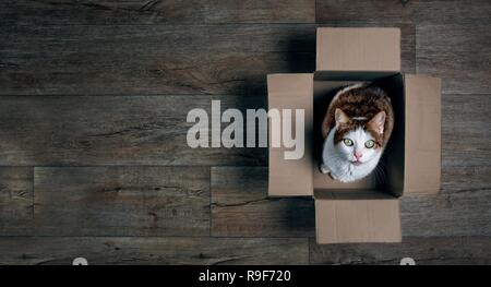 Cute tabby cat in a cardboard box looking up to the camera. Panoramic picture with copy space. - Stock Photo