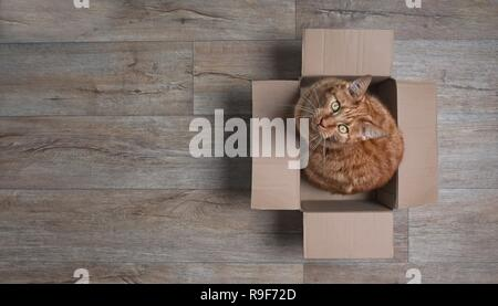 Ginger cat in a cardboard box looking curious up to the camera. Panoramic picture with copy space. - Stock Photo