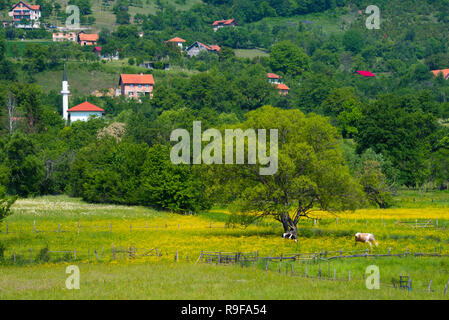 Village and cattle grazing on meadow, southern Bosnia and Herzegovina - Stock Photo