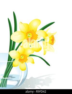 Vector illustration narcissus in glass vase - Stock Photo