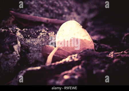 Single leaf with heart shape - Stock Photo