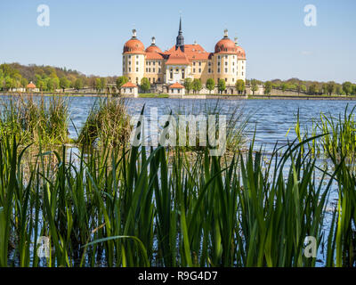 Lake with reeds at Moritzburg Castle near Dresden - Stock Photo