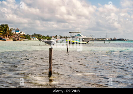 Seagull bird on wooden stick in sea or ocean water in Costa Maya, Mexico. Beach under cloudy grey sky on windy day. Summer vacation, travelling concept. - Stock Photo