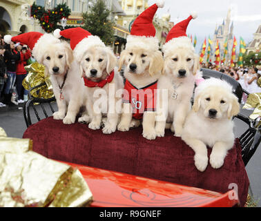 (DEC. 6, 2009):  The canine stars from Disney's new holiday DVD  'Santa Buddies: The Legend of Santa Paws' pose Dec. 6, 2009 on Main Street U.S.A. at the Magic Kingdom in Lake Buena Vista, Fla., while taping a segment for the 'Disney Parks Christmas Day Parade' TV special.  The annual holiday telecast is scheduled to air December 25 on ABC-TV.   People:  Santa Buddies - Stock Photo