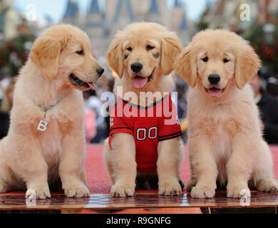 LAKE BUENA VISTA, FL - DECEMBER 02: Three of the canine stars of the upcoming Disney Blu-Ray and DVD film 'Treasure Buddies' make a special appearance during taping of the 'Disney Parks Christmas Day Parade' at the Magic Kingdom park on December 2, 2011 in Lake Buena Vista, Florida. The 28th annual 'Disney Parks Christmas Day Parade' airs nationwide December 25, 2011 on ABC-TV and features performances by a variety of stars from both Disneyland Resort in California and Walt Disney World Resort in Florida.  People:  3 Puppies, Treasure Buddies - Stock Photo