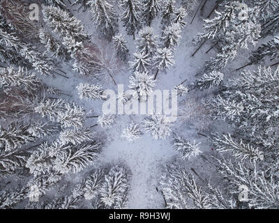 Snowy forest in drone shot from above. Beautiful pattern of frozen trees on cold winter day in Finland. - Stock Photo