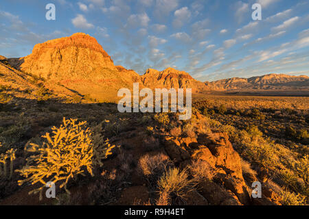 Morning light on peaks and cholla cactus at Red Rock Canyon National Conservation Area.  A popular natural area 20 miles from the Las Vegas strip. - Stock Photo