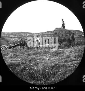 A late Victorian black and white photograph showing hay being gathered in a farm in England. Image shows three people working, loading the hay on to two horse drawn carts. - Stock Photo