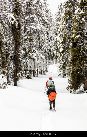 Snowshoers backpacking on public lands outside of Aspen, Colorado break trail after new snowfall. Tall, snow-covered pine trees serve as the backdrop - Stock Photo