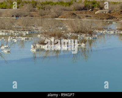 Israel, Dead Sea, salt crystalization caused by water evaporation - Stock Photo