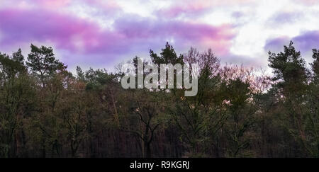 weather phenomenon in the sky, pink and purple nacreous clouds, forest landscape background - Stock Photo