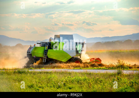 Combine harvesting wheat on field, green and white harvester in action rising clouds of dust - Stock Photo