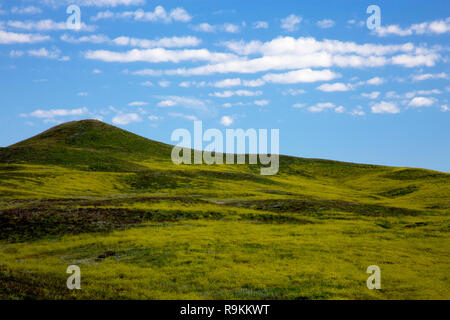 Rolling Green Hills at Custer State Park in South Dakota - Stock Photo