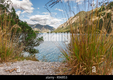 Summery Landscape View at Lake Plansee in Austria with Reed Tufts (lat: Phragmites) in Focused Foreground and Alpine Mountains in Background. - Stock Photo