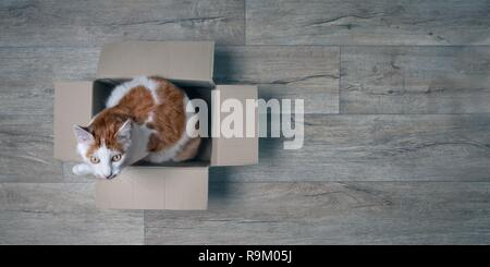 Cute tabby cat sitting in a cardboard box. Panoramic picture with copy space. - Stock Photo