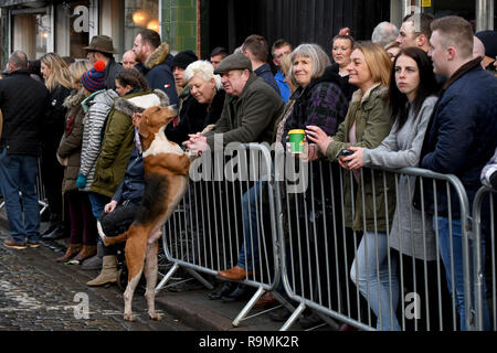 Newport, Shropshire, UK. 26th December, 2018. Making friends! A hound shakes paws with spectators at the Albrighton Hunt Boxing Day meet in Newport Credit: David Bagnall/Alamy Live News - Stock Photo