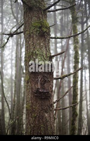 A tree with what looks like a face, in Eugene, Oregon, USA. - Stock Photo