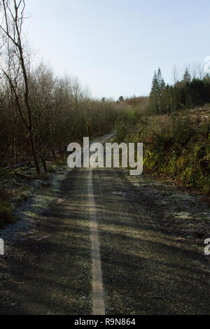 A forest path with a white line in the middle - Stock Photo