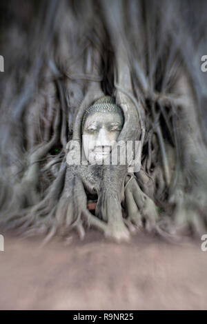 LB00102-00...THAILAND - Head of a buddha intertwined in tree roots at Wat Maha That, Ayutthaya. LensBaby image. - Stock Photo